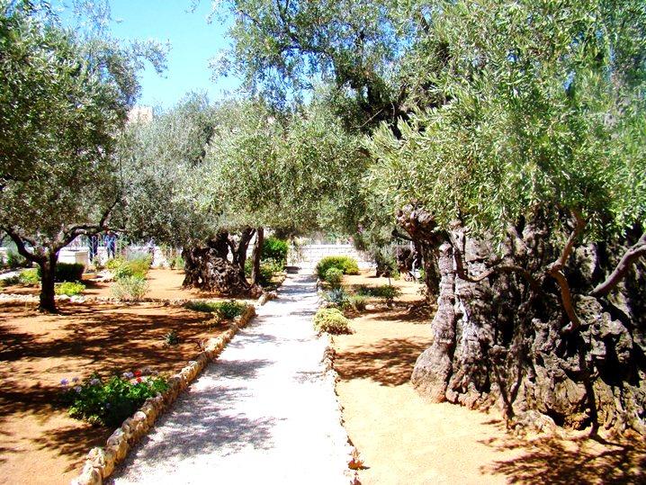 Getseman la escuela del amor programaci n for Aeiou el jardin de clarilu mp3