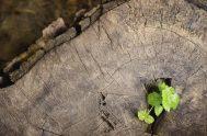 """10/04/2019 – """"Todos los seres vivos modifican de alguna manera el medio en el que viven, un árbol, por ejemplo, modifica el medio…"""