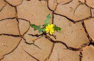 08/08/19- Aveces, la forma en la que uno mira la vida y se enfrenta a lo que le depara marca la diferencia entre…