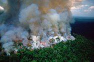 """27/08/2019 – Federico Kopta, presidente del Foro Ambiental Córdoba abordó, en """"Sal y Luz"""", la realidad de los incendios en el Amazonas. El…"""
