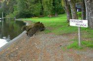 5/01/2019 –Estacionar cerca de un río y poder hacer uso de estas fuentes de agua es, desde hace un largo tiempo, otros ítems…