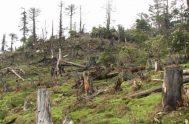 """11/08/2020 – Esta semana en el ciclo """"Cuidar la Creación"""" abordamos, junto al dr. Agustín Luna, el tema del cuidado de nuestros bosques…"""