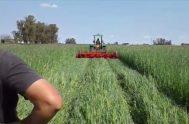 """18/08/2020 – En una nueva edición del ciclo """"Cuidar la Creación"""" abordamos el tema de laproducción de granos convencional en nuestro país. Junto…"""