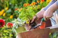 21/09/2020 –Los jardineros tienen herramientas que le ayudan a hacer su trabajo: pala, tijera podadora, rastrillo y guantes. De la misma manera nosotros…