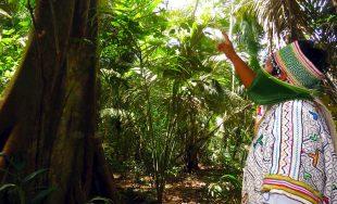 """19/10/2020 – Continuamos profundizando en la Exhortación Apostólica """"Querida Amazonia"""" del Papa Francisco, desde nuestro espacio """"Enseñanzas…"""