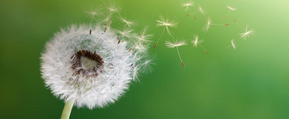 07/05/2021 - La vulnerabilidad es la capacidad que tenemos para dejarnos afectar por lo que sucede, tiene que ver con ser sensibles, sentir las emociones, reconocerlas y estar en ellas. A pesar de que en nuestra sociedad la vulnerabilidad no esta bien vista por la mayoría; ésta tiene una mirada positiva: el mostrarnos frágiles puede ser el punto de partida…