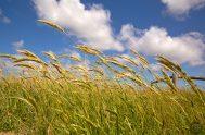 """[audio mp3=""""https://radiomaria.org.ar/_audios/61371.mp3""""][/audio] 19/10/2021 – Pero está claro que al llamarle """"Espíritu"""" (soplo, viento, impulso) la Palabra de Dios quiere detenerse sobre todo en…"""