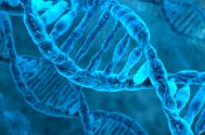 """26/02/2019 – El argumento del Ejecutivo es que """"el ADN para todos es la huella digital del siglo XXI"""". A través de la…"""