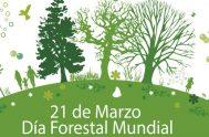 20/03/2019 – Cada 21 de marzo está dedicado a destacar la importancia de los recursos forestales, que contribuyen al desarrollo de todas las…