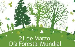 20/03/2019 – Cada 21 de marzo está dedicado a destacar la importancia de los recursos forestales, que contribuyen al desarrollo…