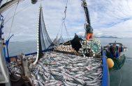 17/04/2019 –En nuestro mar, y a raíz de la explosión mundial de la demanda de langostinos, se está generando un demencial crecimiento del…