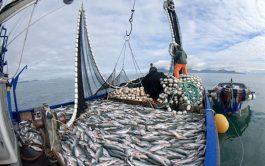17/04/2019 –En nuestro mar, y a raíz de la explosión mundial de la demanda de langostinos, se está generando un…