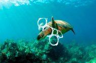 08/05/2019 – Cada día se dan a conocer nuevos hechos alarmantes sobre la creciente presencia de residuos en los océanos y los graves…