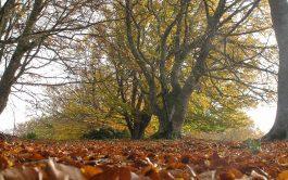 Como el árbol que pierde su corteza y se abre ante el mundo mostrando su interioridad, así el cristiano cuando…