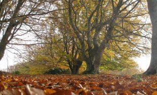 Como el árbol que pierde su corteza y se abre ante el mundo mostrando su interioridad, así…