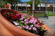 Llegó la primavera. La estación de las flores y las alergias. Tiempo donde todo árbol que miremos a nuestro alrededor nos regala una…