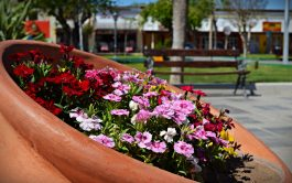 Llegó la primavera. La estación de las flores y las alergias. Tiempo donde todo árbol que miremos a nuestro alrededor…