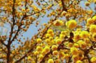 La Palabra de Dios es una eterna primavera. En Ella, la vida está latente en cada página. Mientras la leemos vamos vislumbrando en…