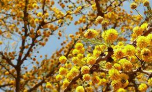 La Palabra de Dios es una eterna primavera. En Ella, la vida está latente en cada página.…