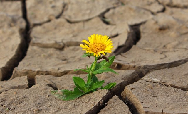 Florecer en medio de mi jardín. Es que no necesito más, no hay momento ideal, no puedo esperar el lugar perfecto, el entorno soñado.  Es que Dios me puso en este jardín, acá me soñó, me sembró, me pensó, y hoy estoy invitada amablemente a florecer.  Amando mi circunstancia, cargando mi cruz, superando la sequía de esta Tierra.…